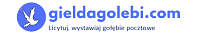 Giełda gołębi czyli aukcje gołębi pocztowych. Licytuj na gieldagolebi.com