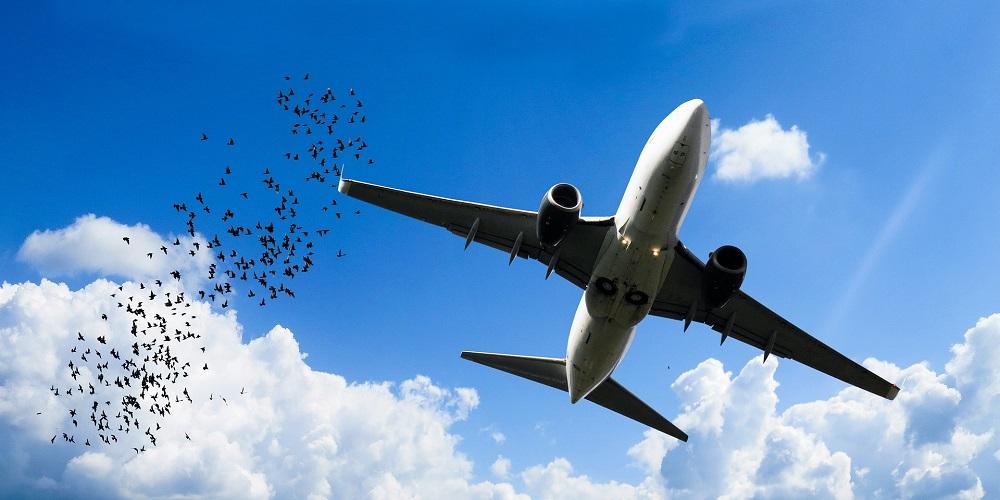 transport ptaków